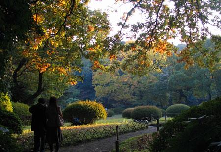 1107-Meiji Jingu-34-450