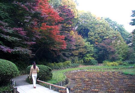 1107-Meiji Jingu-35-450