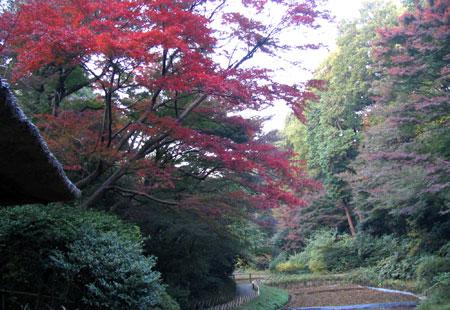 1107-Meiji Jingu-36-450