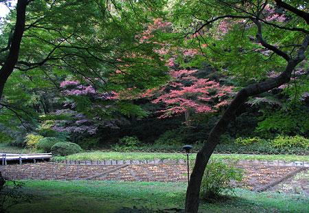 1107-Meiji Jingu-37-450