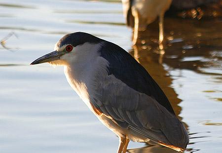 1207-Bcn Heron 02-450