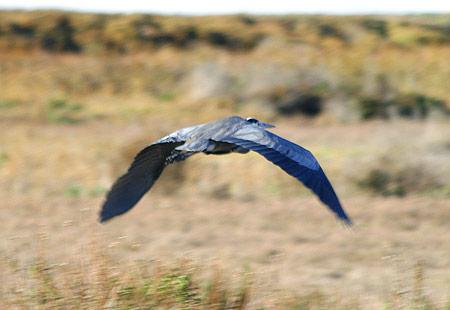 1207-Gb Heron 02-450