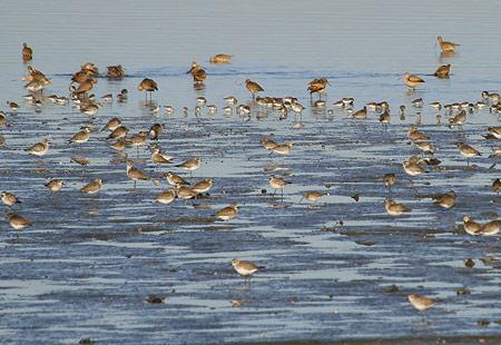 1207-Shorebirds 03-450