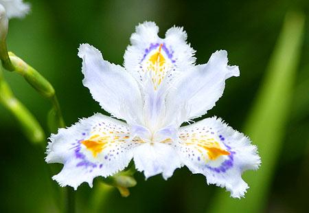 0508-Takao-Blossom01
